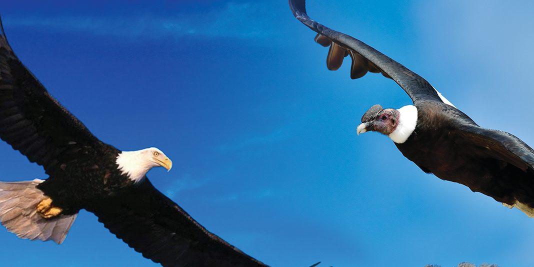 Entre el Águila y el Cóndor. Toltecápsulas 69